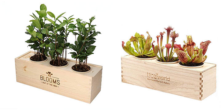 Plantenboxen